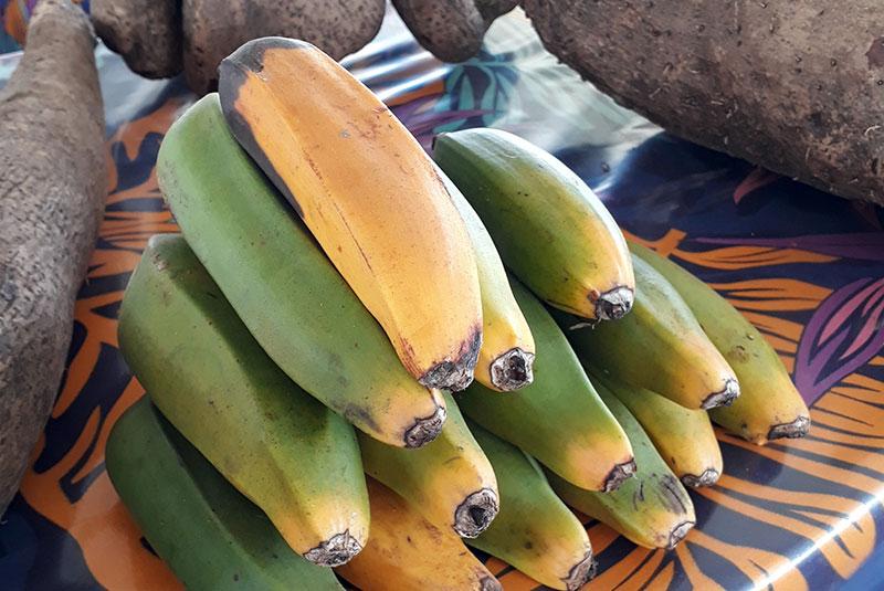 Tas de banane fei plantain en cours de maturité.