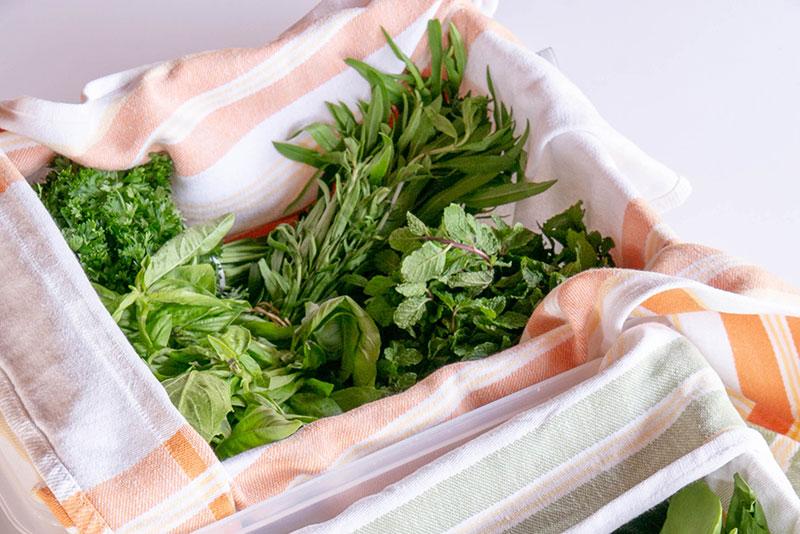 Feuilles vertes conserver dans une boîte hermétique.