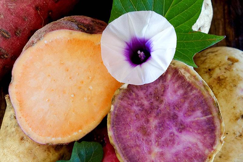 Patates douces à chair orange et violette coupées.