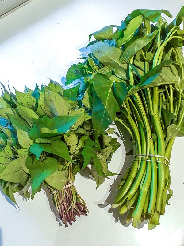 Bouquets de feuilles de patates douces et de liseron d'eau.